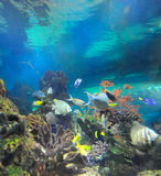 podmorski świat Fotografia Royalty Free