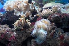 podmorski świat Zdjęcie Royalty Free