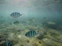 Podmorski świat z rybami i koralami zdjęcie stock