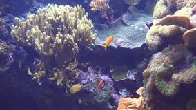 Podmorski rybi zbiornik zbiory wideo