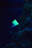 Podmorski świat Zdjęcie Stock