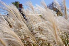 Podmuchowe spadek trawy przy Amana koloniami, Iowa Obraz Royalty Free