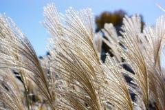 Podmuchowe spadek trawy przy Amana koloniami, Iowa Obraz Stock