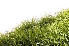 podmuchowej trawy wysoki wiatr Zdjęcie Stock