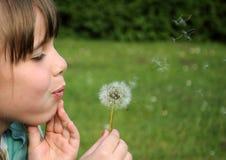 podmuchowi dandelion dziewczyny potomstwa Obraz Stock