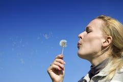 podmuchowy dandelion sia kobiet potomstwa Fotografia Royalty Free