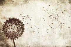 podmuchowy tła dandelion Zdjęcie Royalty Free