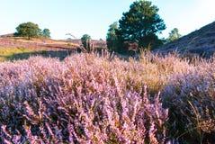 Podniecający krajobraz Fotografia Royalty Free