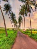 Podniosła droga z kokosowymi drzewami i greenfield zdjęcia royalty free
