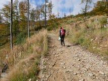 Podnosić up grat w lesie zdjęcie royalty free