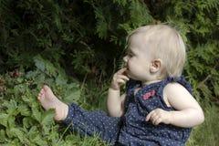 Podnosić dzikie truskawki Obrazy Royalty Free