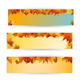 podobieństwo liści jesienią rozmiaru xxxl Zdjęcia Stock