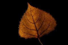 podobieństwo liści jesienią rozmiaru xxxl Fotografia Royalty Free