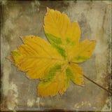 podobieństwo liści jesienią rozmiaru xxxl Obrazy Stock