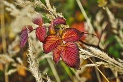 podobieństwo liści jesienią rozmiaru xxxl Obrazy Royalty Free