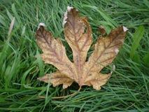 podobieństwo liści jesienią rozmiaru xxxl Zdjęcie Royalty Free