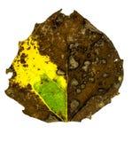 podobieństwo liści jesienią rozmiaru xxxl Fotografia Stock
