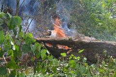 podpala las Obrazy Stock