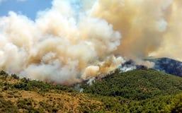 Podpala w lasowych terenach w Viotia w Środkowym Grecja obrazy stock