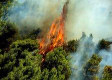 Podpala w lasowych terenach w Viotia w Środkowym Grecja fotografia stock