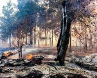 Podpala w lesie drzewa pali mnóstwo dym obrazy royalty free
