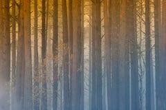 Podpala w lesie, dym, smog, burnt las obrazy stock