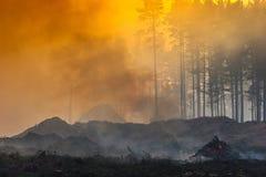 Podpala w lesie, dym, smog, burnt las fotografia stock