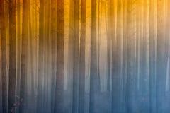 Podpala w lesie, dym, smog, burnt las obrazy royalty free
