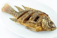 podpalająca ryb zdjęcia royalty free
