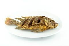 podpalająca ryb zdjęcia stock