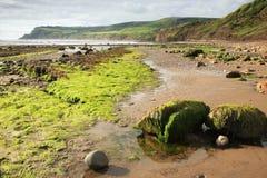 podpalana plaża okapturza rudzika Obraz Stock