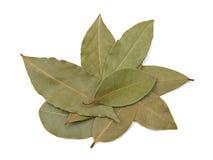 Podpalanego bobka Laurus nobilis liście obraz stock