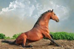Podpalanego konia obsiadanie Zdjęcia Stock