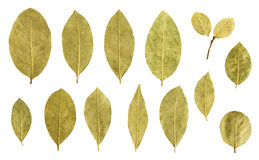 Podpalanego liścia kolekcja odizolowywająca na bielu Obraz Stock