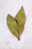 podpalani świezi ziele odizolowywający liść biały Fotografia Royalty Free