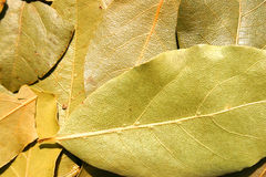 podpalani świezi ziele odizolowywający liść biały Obraz Royalty Free