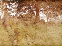 podpalani polany tekstury drzewa Zdjęcie Stock