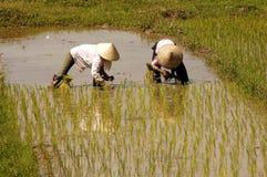 podpalany śródpolny halong ryżowy drogowy Vietnam Obrazy Stock