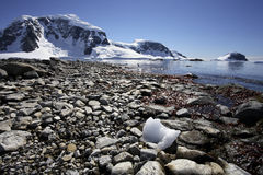 podpalany Antarctica cuverville Zdjęcia Royalty Free