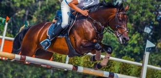 Podpalany dressage koń, jeździec w bielu munduru spełnianiu i skaczemy przy przedstawienia doskakiwania rywalizacją Equestrian sp Obrazy Stock