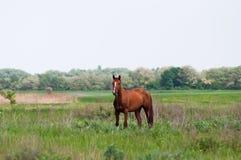 Podpalany koń zdjęcie stock
