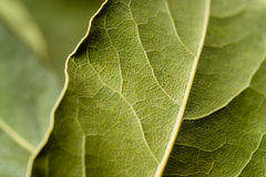 Podpalany liść makro-. Zielony tło. fotografia royalty free