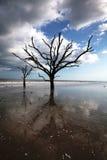 podpalany plażowy boneyard botaniki sc sylwetki drzewo Zdjęcia Stock