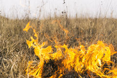 Podpalenie w naturze Obraz Royalty Free