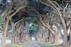 Podpisu Cyprysowego drzewa tunel w Inverness zdjęcia royalty free