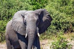 Podróż Afryka Słoń - przerzedże Zdjęcia Stock