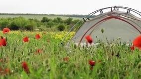 Podróż namiotu stojaki na kwitnąć wiosny pole z kwiatami kiwa w wiatrze zdjęcie wideo