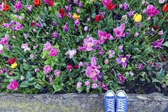 Podróżni snickers w kwiatu okwitnięciu Zdjęcia Royalty Free