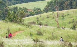 Podróżnicy trekking na sposobie otaczającym zielonymi kwiatonośnymi gras Zdjęcie Royalty Free