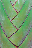 Podróżnicza palma Obraz Royalty Free